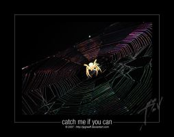 Catch me if You Can by jpgreeff