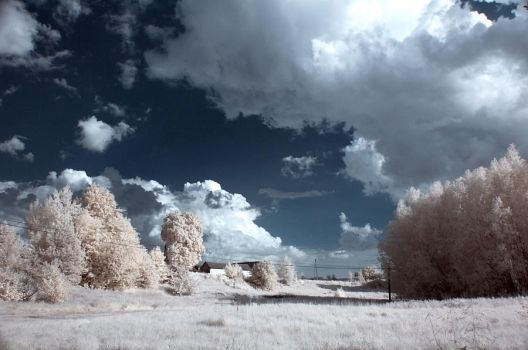 Infrared view 02 by Anntylus