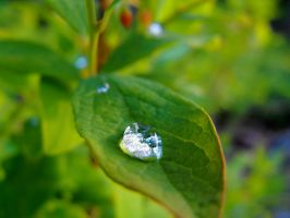 Dewdrop by THEsimplePLEASURES