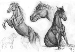 Horse studies by dragonlizzard