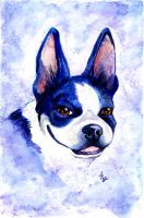Boston Terrier full color by thornwolf