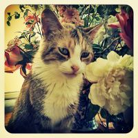 Cat with flowers by Grape-Soda-x