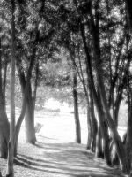 Nature_ path _ infrared by Aimelle-Stock