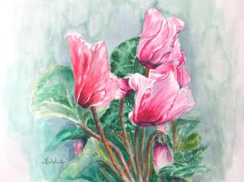 cyclamen by danuta50