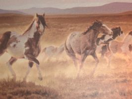 Wild Horses Wallpaper Border by 4everRiding