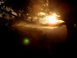 A Setting Sun in the Branches by tablelander