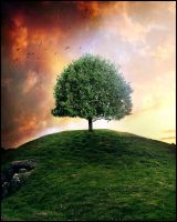 Tree Of The Hill1 by laviniacosta