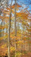 The Look of Fall by Raysperspective