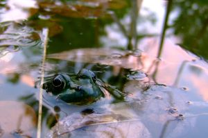 Frog by JJTM