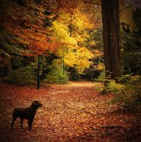 Autumnal dog by chavez666
