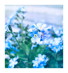 forget.me.not. by erykucciola