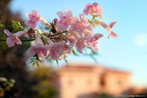 Nature in the Streets VI by Raphael-Ben-Dor