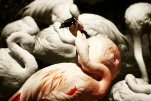 Flamingos by xxtgxx