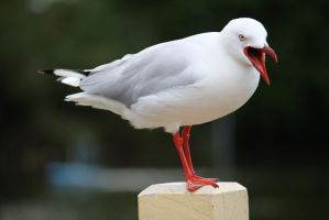 Seagull 1964 by fa-stock