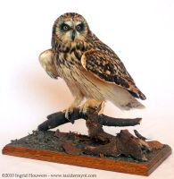 Taxidermy - Short eared owl by Illahie