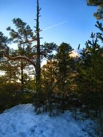 Woods - Snowy - Sunny 2 by hrimthurs-stock