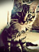 Juanito the cat III by FlotarEsCaer
