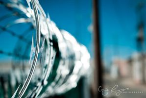 Barbed Wire by creynolds25