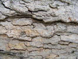 Bark Textures 12 by DKD-Stock