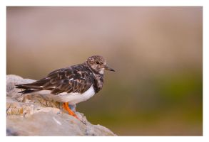 Turnstone by Neutron2K