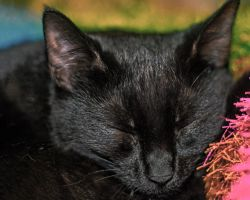 Let sleeping cats lay. by Mackingster