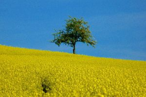 small tree in spring by Dieffi