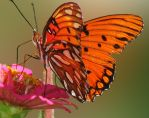 Butterfly Dance by DesiaB