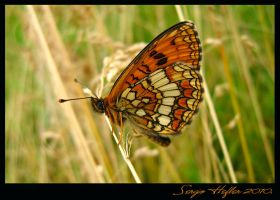buterfly012 by cartell1985
