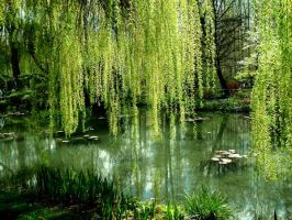 Monet's Water Garden by virunee
