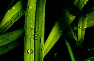 Droplets on Grass by BalchPhoto