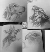 Sketches by Respeanut