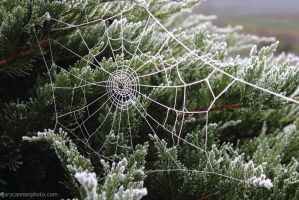 Frozen Web by worldtravel04
