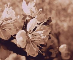 Spring remains by VasiDgallery