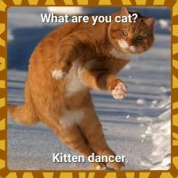 im a danceing  kitty by Wolf1266