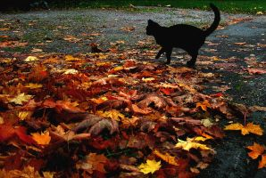 Silhouette of a cat and leaves by Maresolo