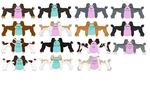 Poodle Color Chart by TsonianFieldsRanch