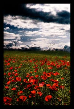 In Flanders Fields... by Jenna-Rose