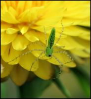 Green On Yellow by craftworker