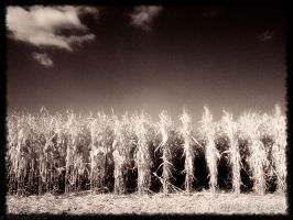 children of the corn by rschoeller