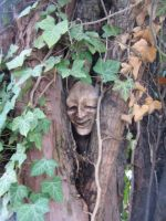 Tree face by Iecee