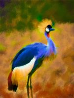Crowned Crane by fmr0