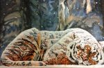 Tiger Sleeping in the Snow by lou85