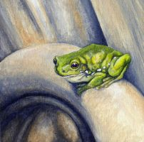 Frog by glait