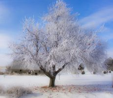 Apples in Winter by tjsviews