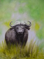 cape buffalo by gabor5555