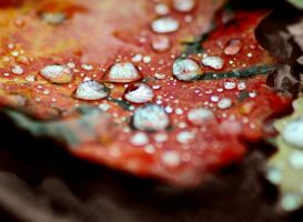 When autumn rain falls.. by forrest-walker