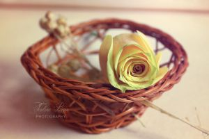 Old Tones by xChristina27x