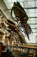 Whale Bones by suolasPhotography