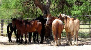 Horse Herd Stock 01 by Rejects-Stock