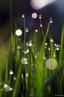 Morning Droplets by George---Kirk